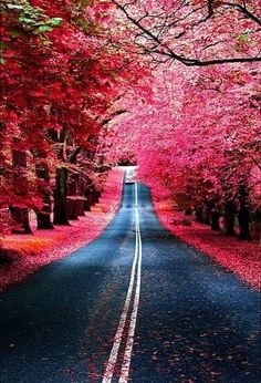 Red Tree Lined Road