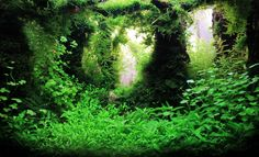 Aquascaping   Международен Балкански Акваскейпинг ...I feel like this could use some uncovered wood, but it feels like a fairy-tale forest.