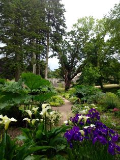 Aberglasney Gardens Shade Garden, Welsh, Garden Design, Oriental, Trees, Shades, Plants, Gardens, Country Living