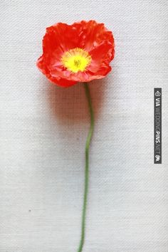 poppy | CHECK OUT MORE IDEAS AT WEDDINGPINS.NET | #weddings #weddingflowers #flowers