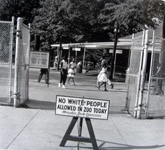 "1959. ""Black day"" in zoo of Memphis"