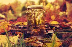Autumn in a jar .)