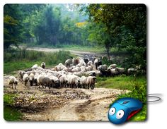 Mouse Mat great computer pad office accessories computer desk accessory best mouse pad Computer Mouse Photo mouse pad Nature Images Amazingly picture beautiful photo of stunning nature, trees and forest nature relaxing, a flock of sheep grazing - Beauty gifts for Home decor or Office decor adds charm to your home office or workplace. p#103  Beautiful Mousepads are rectangle shaped stylish omfortable mouse pads.