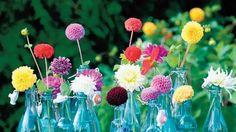 Máte slušnú zásobu sklenených fliaš a k tomu v záhradke napríklad pestrofarebné georgíny?