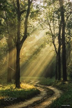 Captured early morning in the beatiful Kanha National Park, India. Beautiful Forest, Beautiful Places, Jim Corbett National Park, Forest Waterfall, Light Rays, Hill Station, Green Trees, Early Morning, Landscape Art