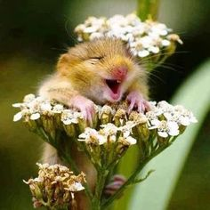 The 25 Happiest Animals In The World -- it's silly things like this that make me laugh and make my day.