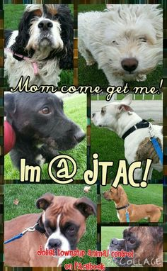 #lostdogsillinois #lostdogs at #Joliet township animal control