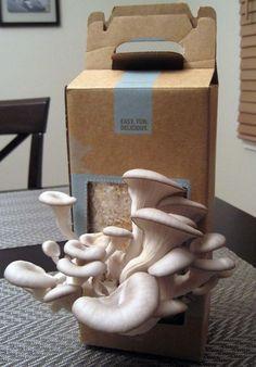 Oyster mushroom love