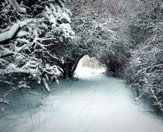 Buckeye trail Feb. 08'