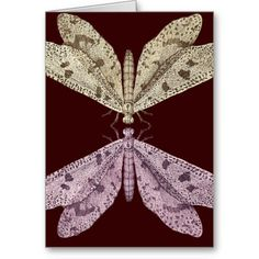 Please Stay In Touch - Two Moths Touching Antenae Cards