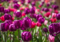 Photo Colors of Spring by Eva Lechner on 500px