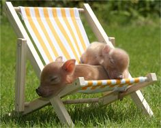 piglets in the sun!