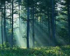 Los bosques caducifolios son muy adecuados para hacer frente a los extremos de las regiones templadas