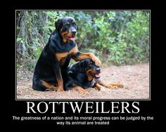 Funny Rottweiler Quotes and Pictures | Rottweiler motivational by kitsune2008