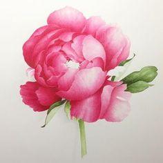 Peony Painting, Peonies, Watercolor, Rose, Instagram, Flowers, Plants, Peony, Botany