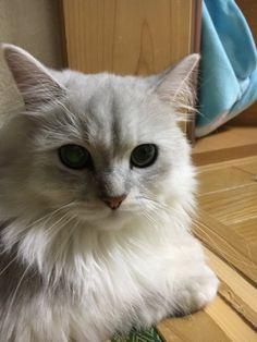 【画像あり】 え?ちょっとまって!!家に猫が来てる!!!!!速報!!!! : 〓 ねこメモ 〓