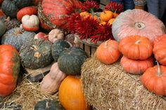 Foodie Guide to Winter Squash | ITALY Magazine