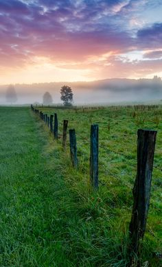 Foggy morning by Stefan Gerzoskovitz / 500px (Germany)