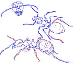 how to draw an ant step 5