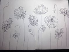 Poppies in Sketch Book on Behance