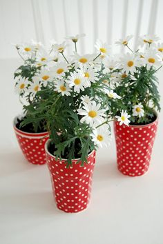 Daisies in dotty GreenGate