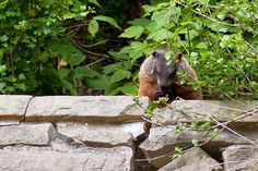 A Photo in the life of: One more of Mr Groundhog from the weekend