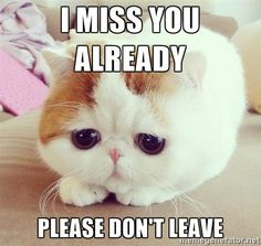 I miss you already Please don't leave - sad kitten 12 | Meme Generator