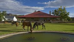 Thorn Springs | Middelburg Accommodation | Perfect Hideaways