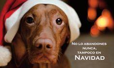Antes de regalar un animal, piénsalo dos veces - http://www.dream-alcala.com/antes-de-regalar-un-animal-piensalo-dos-veces/