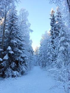 Winter has come by Mai: 11月の美しい日に。すべてを吸い込むような静けさと、肌に切り込むような澄んだ空気に圧倒されました。Visit Finland賞は、フィンランド航空にてフィンランドへの旅1週間。フィンランド政府観光局の写真フォトコンテストに応募しよう!