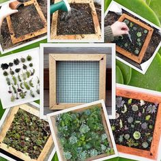 Succulent Living Wall Art, Vertical Picture Kit, Buy this or we can make custom sizes. $49.90