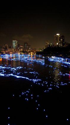 Blue illumination depicting the Milky Way on Okawa River, Osaka, Japan 大川の七夕祭