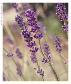 blomst4_lille
