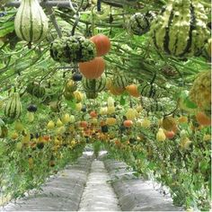 Squash walkway. How cool is this?