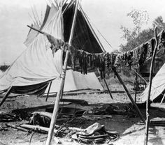Pemmican, sun-dried meat used by Native Americans (Dakota), hangs in strips on a crossbar supported by two timber stands. Tepees, a carriage assembly, and dishes are in the background. Between 1880 and 1910.  Note: Native American women used dried buffalo meat to make pemmican (Naive American Encyclopedia.