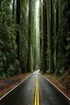 Avenue of the Giants, Humboldt Redwoods State Park, California, USA #stateParkUsa
