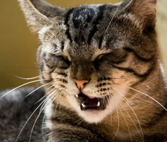 The medical term for a cat's stuffy nose is rhinitis — and it can be caused by bacterial infections, parasites and more.