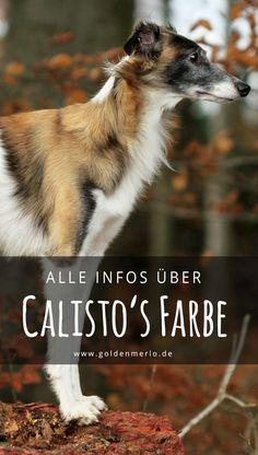 Calisto's außergewöh