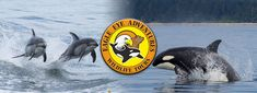 Save on a Wildlife Tour Featuring Whale Watching at Eagle Eye Adventure Tours in Campbell River! Minke Whale, Eagle Eye, Adventure Tours, Whale Watching, Vancouver Island, Black Bear, Opportunity, Wildlife, River