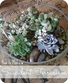 Goat & Lulu: How to Make a Succulent Terrarium. This is an excellent tutorial!