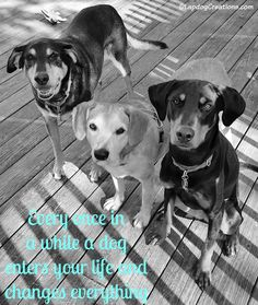 Every once in a while a dog enters your life and changes everything #DogQuotes #RescueDog #ILoveMyDogs #Hound #Doberman ©LapdogCreations