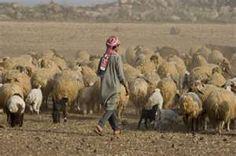 Bedouin sheepherder near Tartous, Syria