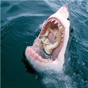 'Celebrity Stunts - Open photoshop contest is now closed. Scary Animals, Animals And Pets, Shark Pictures, Animal Pictures, Shark Bait, Great White Shark, Ocean Creatures, Mundo Animal, Cutest Animals