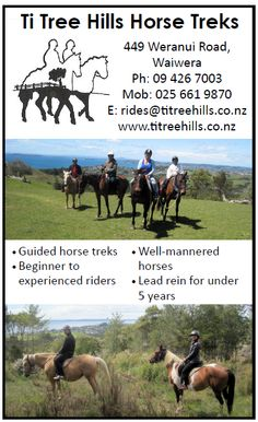 Ti Tree Hills Horse Treks, Horse riding in Waiwera