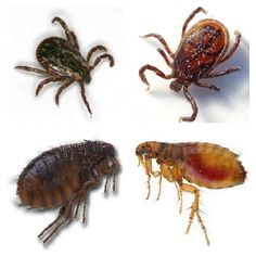 Can Applying Sulfur To Your Yard Get Rid Of Ticks Amp Fleas