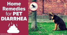 There are several reasons pets get diarrhea, but the most common cause by far is dietary indiscretion. http://healthypets.mercola.com/sites/healthypets/archive/2017/02/26/diarrhea-in-pets.aspx