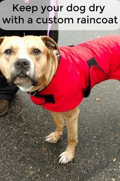 A custom dog raincoat can fit any dog, even a muscular dog like this! Waterproof Dog Coats, Waterproof Fabric, Dog Smells, Dog Winter Coat, Dog Raincoat, Dog Care, Stay Warm, More Fun, Life Is Good
