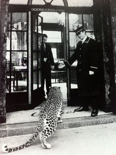 Spotted on Paris Street- arriving no doubt for his photo shoot with Cartier Black And White Picture Wall, Black And White Pictures, Black White, Photo Black, Boujee Aesthetic, Aesthetic Pictures, Aesthetic Vintage, Foto Glamour, Leopard Print Outfits