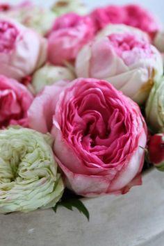English Roses | via:MademoiselleWinck.blogspot.com