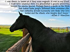 """""""I was drawn to horses as if they were magnets. It was..."""" never heard this great quote before."""
